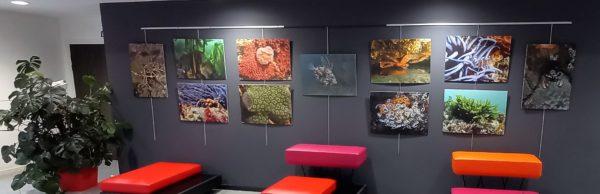 Exposition photo à la Sirène